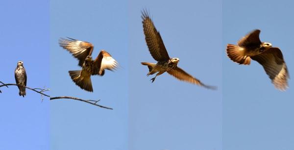 Flying by Davidroid