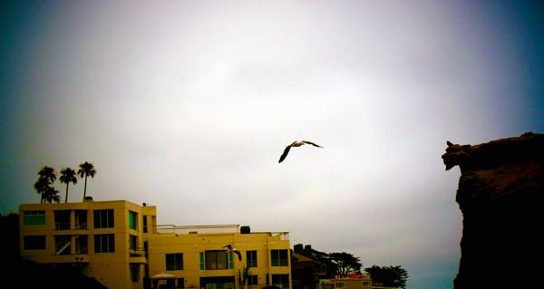ROAMING THE SKY by rariyanto99