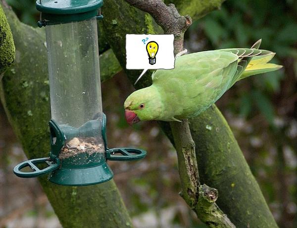 thinking bird by macdaniel