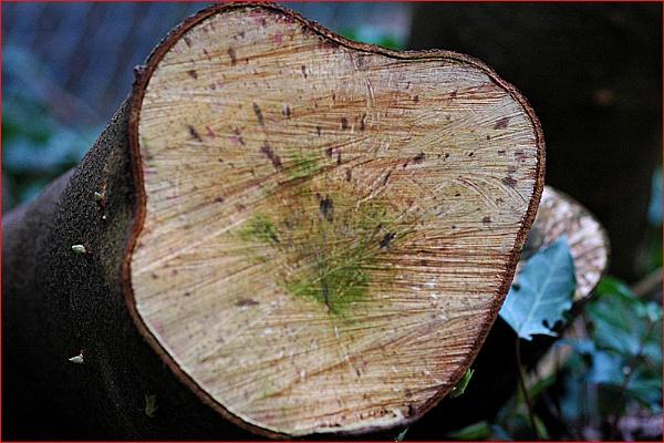 Tree Stump by DolphinLady