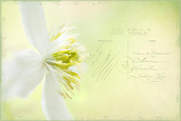 summer correspondance by JanieB43