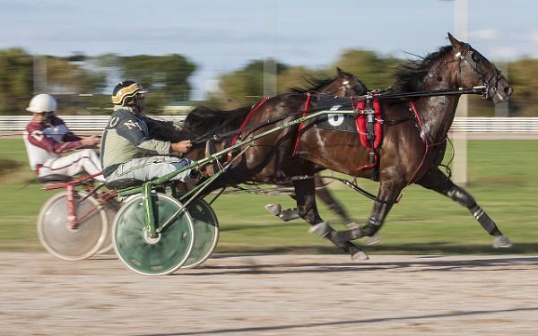 Tir Prince Harness Racing by boomer