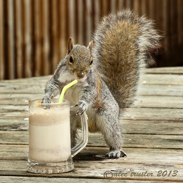 Peanut Smothie by paddyman