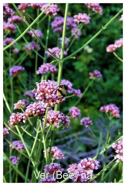 Ver (bee) na by IOWAndy