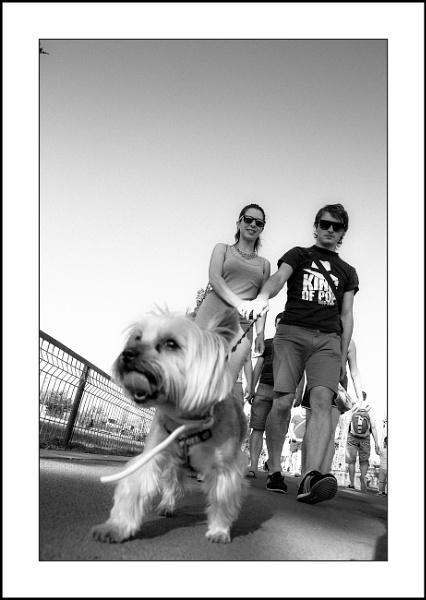 Fetch! by touchingportraits