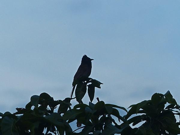 BEAUTIFUL BIRD by amitav