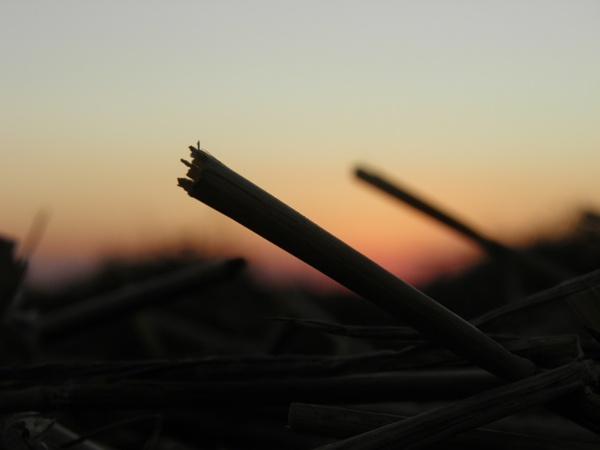 Sunset straw by longhoss