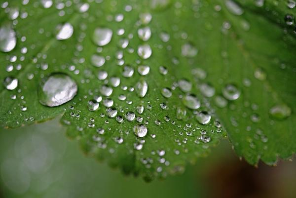Dew by Minutefilm