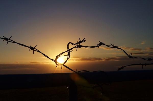 Barbed sunset! by Margaret101