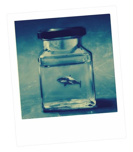 Shark in a jam jar by marlin50