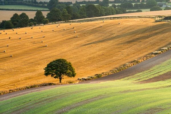 Harvest Time by rvoller