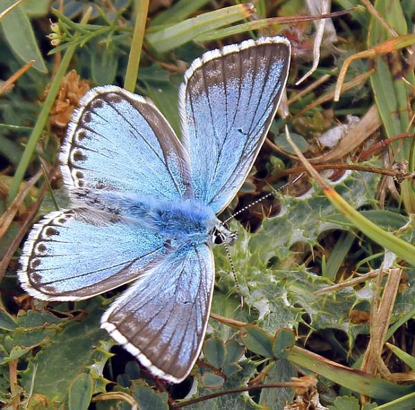 Wight Butterflies by Fefe