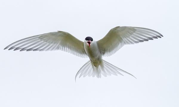 Angels wings by Daxiesmum