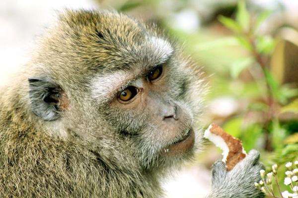 Monkey by grlloyd