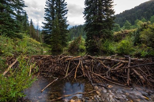 beaver dam by ssnidey