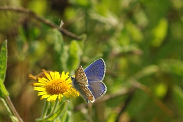 Powder Blue Butterfly by elizabethapike62