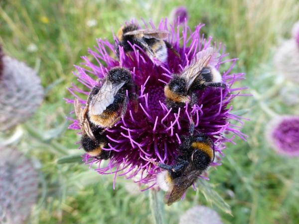 Bee Happy by SarahJane43
