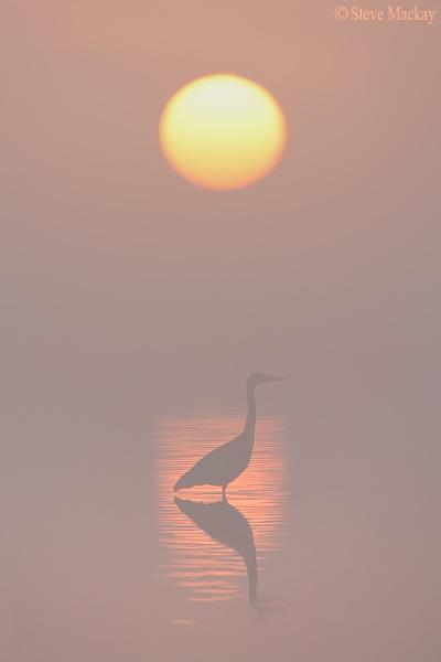 Misty Heron Sunrise by SteveMackay