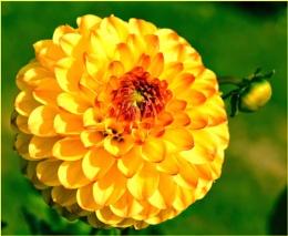 * * SUNSHINE FLOWERS * *