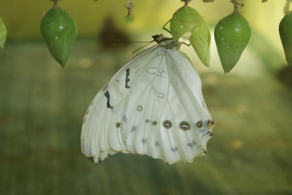 Eden Butterfly by SexyDan