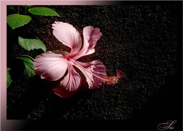Pink by samarmishra