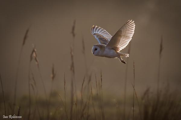 The Hunter by ianrobinson