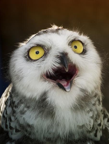 Owl Eyes by Audran
