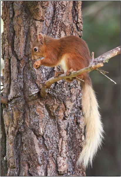 Tough nut by ianto