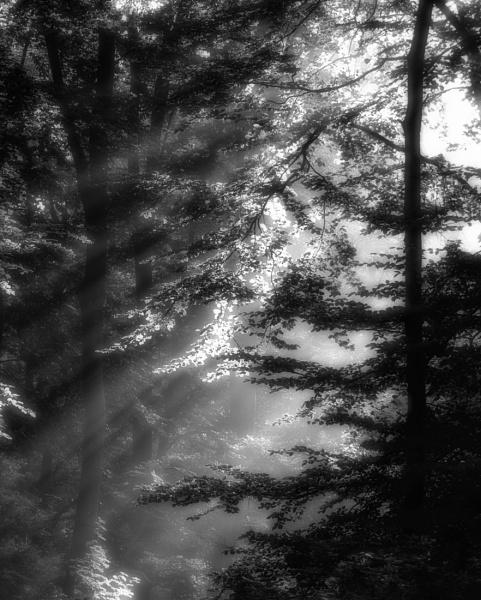 Between the Light by mlseawell
