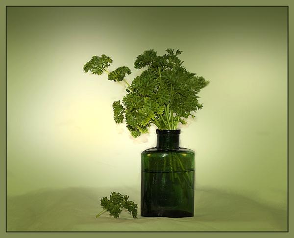 Parsley in a Bottle by Irishkate