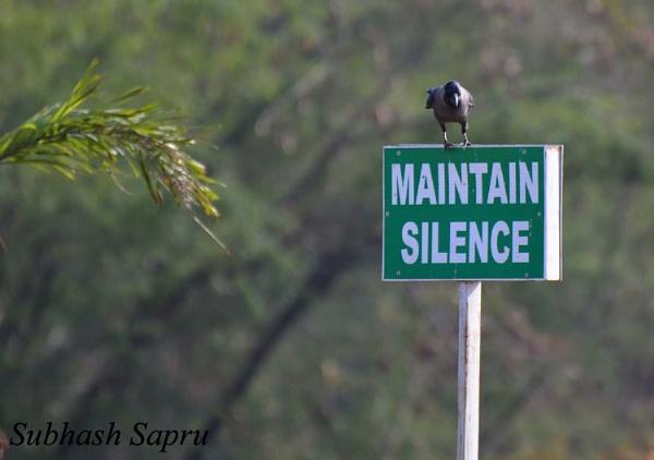 Silence Please by Subhashsapru