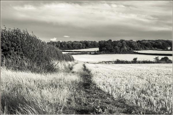 The Fields by Kilmas