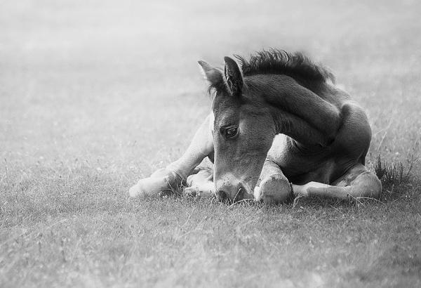 Little Horse by MartinWait