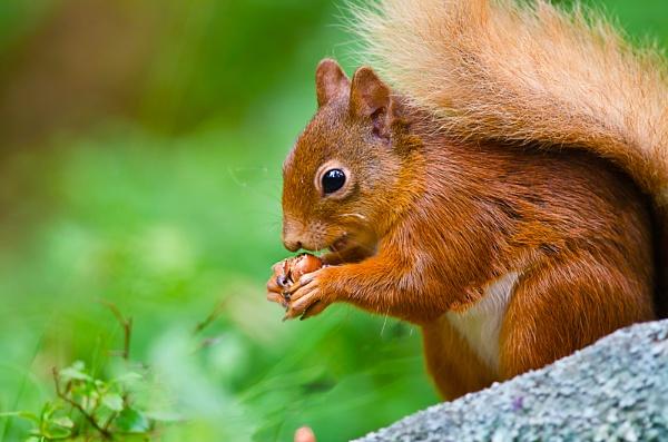 nuts! whole hazel nuts. by deadlash