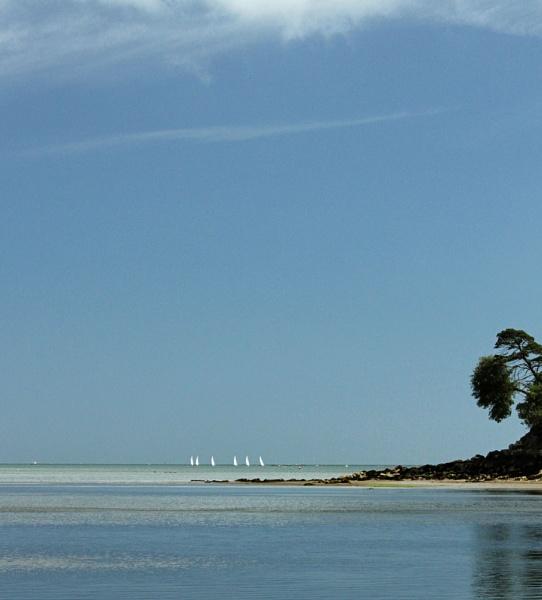 Sailboats by Fefe