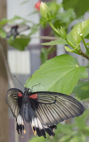 Butterfly by steveo12