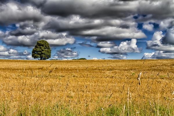 Harvested Field by stevew10000