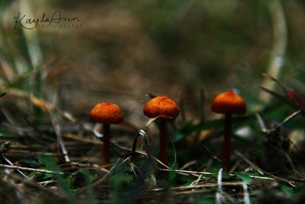 three little mushrooms by kayla_ann