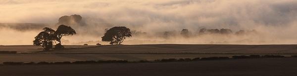 rolling mist by milepost46