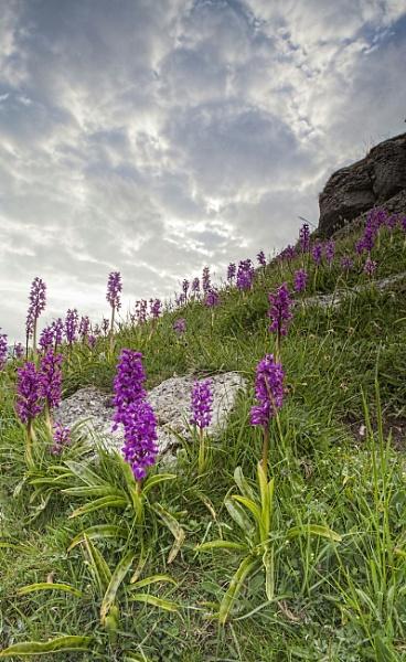 wild bloom by derky