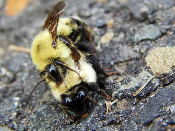"\"" Bee My Honey \"" by Stmarkus"