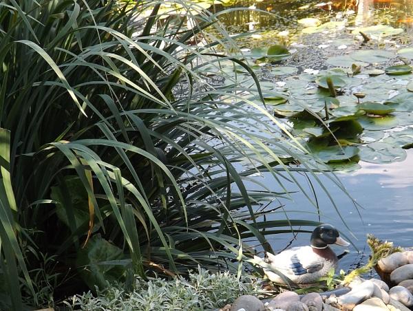 Duck ! by Mollycat