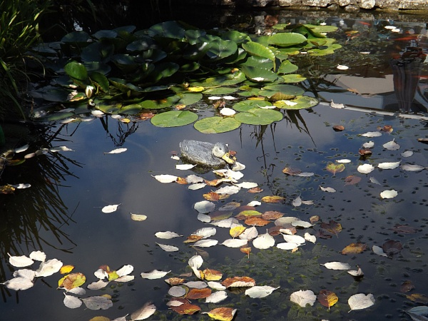 The pond. by Mollycat