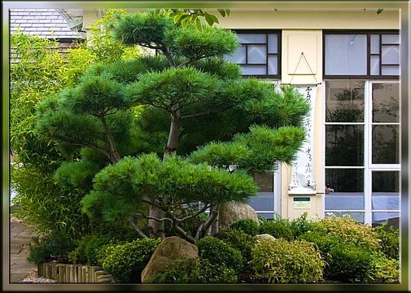 japanese garden by cjl47
