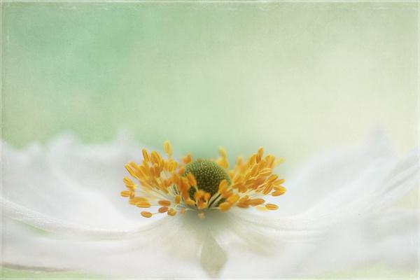 summers softness by JanieB43
