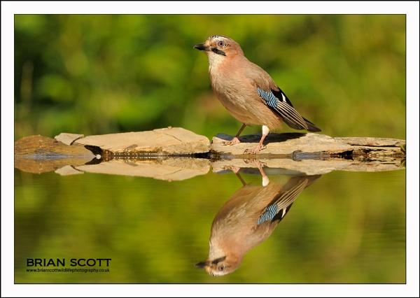 Jay reflection by Brian_Scott