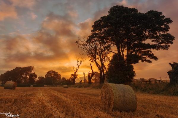 Field Of Dreams by jimmypop