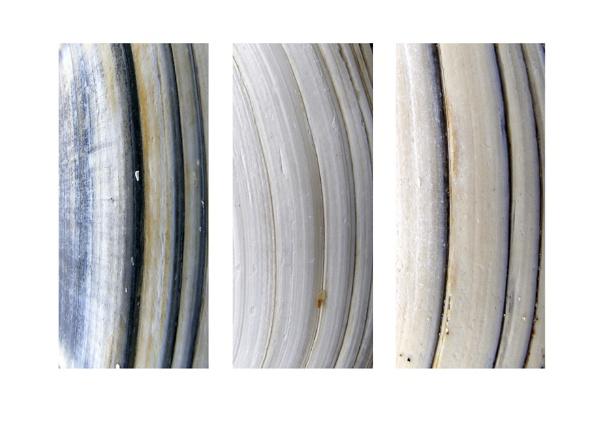 shells by ireland