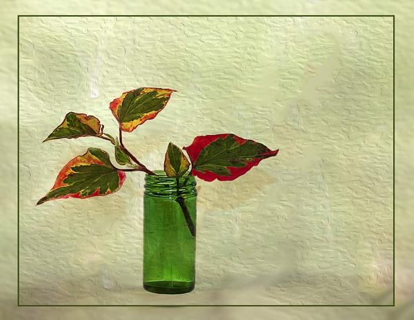 Leaves in a Bottle by Irishkate