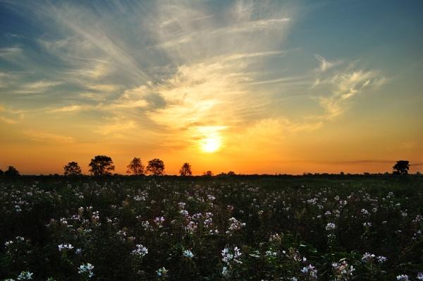 Sun Rise by arindomb
